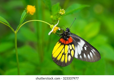 closeup butterfly on flowers