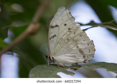 closeup of butterfly on leaf