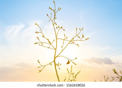 closeup butterfly sit on a tree branch in a light of evening sun, stylized outdoor sunset background