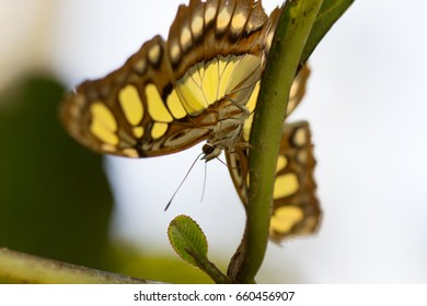 closeup of butterfly topdown on plant