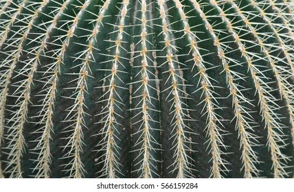 Closeup cactus background