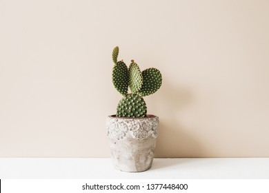 Closeup of cactus in flowerpot on beige background. Minimal neutral interior design floral composition.