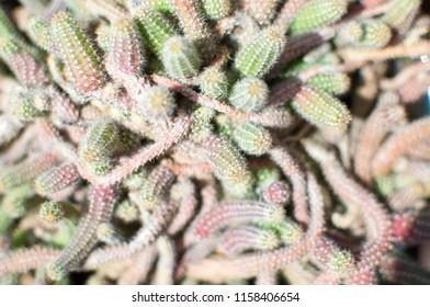 Closeup of cactus in the garden.