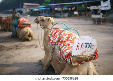 A Closeup of a camel with its name written on the backside. It has been tamed for riding, at the JAMPORE BEACH, DAMAN, INDIA.