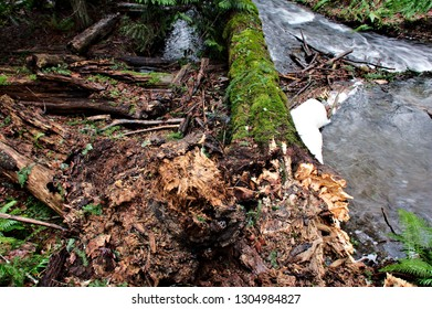 Closeup capture of a decaying rootstock with tree trunk covered in moss resting alongside a cascading river fine details and weathered wood texture