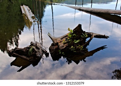 Closeup capture of decaying rootstock and tree trunks laying in the shallow waters of Westwood lake surrounded by the calm waters and mirror reflections in the water on a mostly sunny day