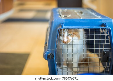 closeup of a cat in a carrier at animal hospital looking out