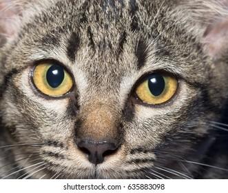 Close-up cat eyes
