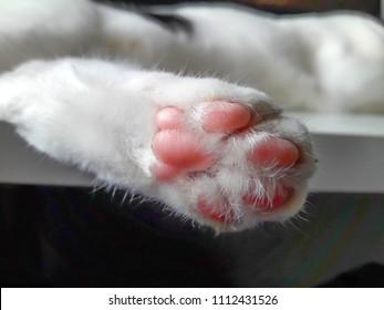 Closeup of Cat Paws.