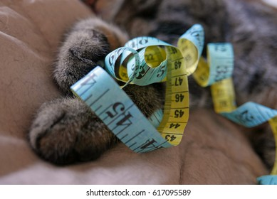 Closeup of cat paws holding a blue and yellow measuring tape