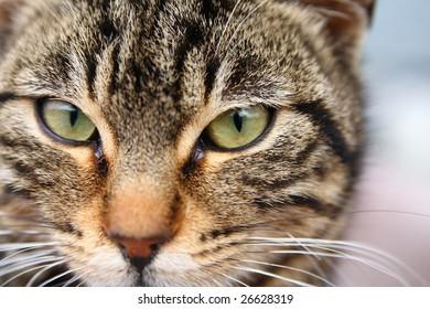 close-up cat portrait