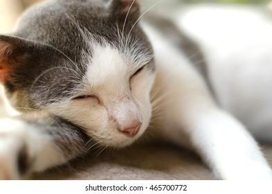 Close-up cat is sleeping.