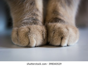close-up of cat's paw