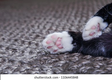 Closeup of a cats paws laying on a carpet