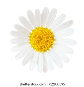 Close-up of Chamomile (Ox-Eye Daisy ) isolated on white background.