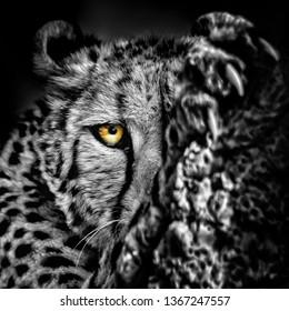 Closeup of cheetah
