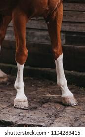 Closeup of chestnut's horse's legs