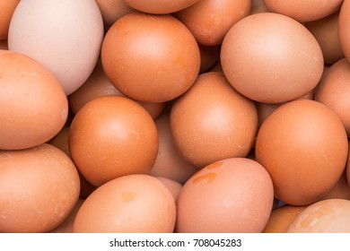 close-up of chicken brown egg view from top for background