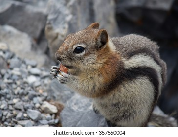 closeup of chipmunk holding a and eating an almond with rocks in the back