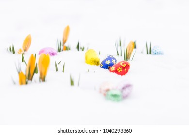 Closeup of chocolate easter eggs wrapped in pink, orange, green, golden, blue and red aluminum foil laying on fresh snow besides young yellow crocus buds outdoors in spring