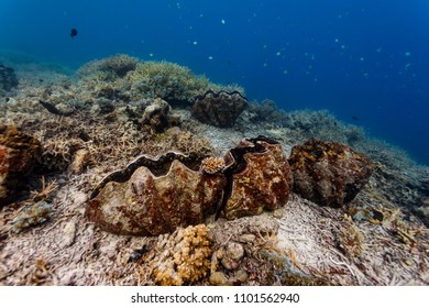 Closeup of closed and open giant clams on coral reef
