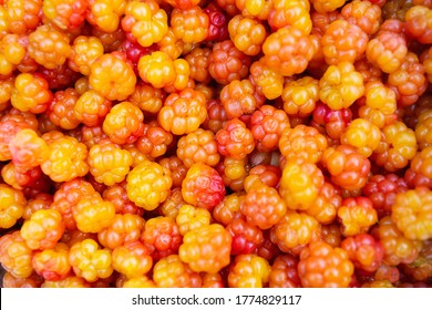 Close-up of cloudberry as a background. Collecting forest ripe cloudberries from the forest. Summer berry. The view from the top.