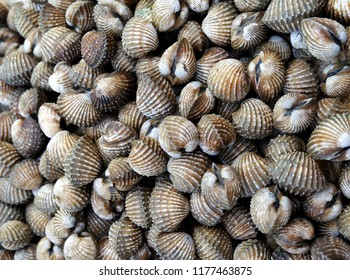 The Closeup of cockle shell background at fish market.