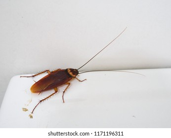close-up cockroach in a toilet