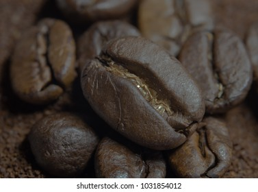 closeup of a coffeebean