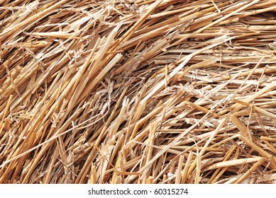 closeup collected during the autumn harvest hay