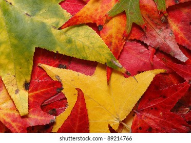 A close-up of colorful autumn leaves