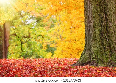 Closeup of colorful autumn trees at a park in New England. Fallen maple tree leaves forming a beautiful red carpet.
