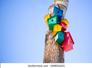 Closeup of colorful birdhouses on a tree on the right in the photo on the background of a light blue sky: bird commune, three yellow houses for birds, two pink houses for birds