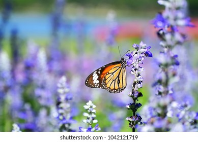 Close-up Colorful Butterfly On the Purple Flower