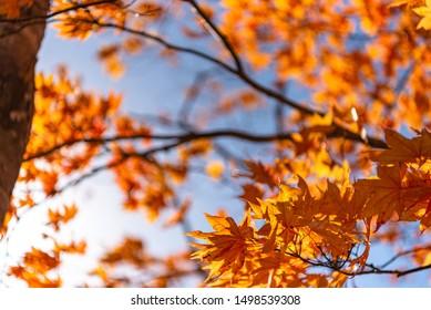晴れた日にカラフルな秋の葉を接写する。美しい秋の風景背景