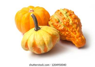 closeup of colorful gourds for halloween decoration on white background