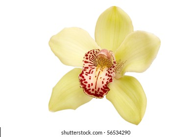 closeup of colorful orchid on white background
