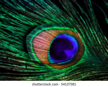 Closeup of the colorful patterns of a peacock feather.