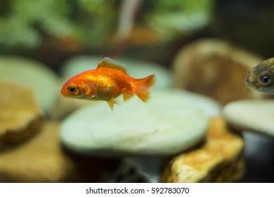 closeup of colourfully fish in aquarium