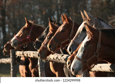 Close-up of colts in the pasture.