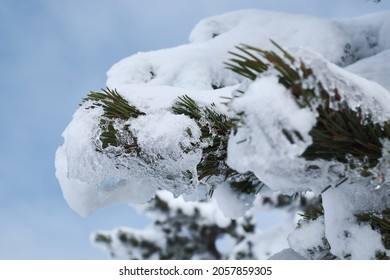 Nahaufnahme eines Schneegifers auf dem Berg Wank in Bayern bei Garmisch-Partenkirchen