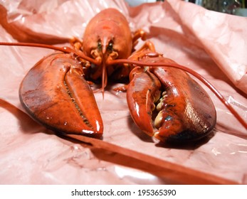 Close-up of a cooked lobster