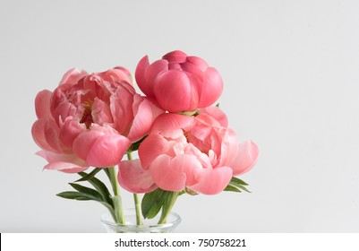 Closeup of coral peonies in glass vase against neutral background (selective focus)