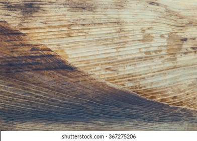 Closeup of corn husk texture or abstract background. Corn husk grill to burnt, food of Thailand.
