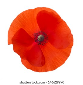 Close-up Corn Poppy (papaver rhoeas) Isolated with Clipping Path