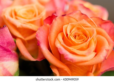 Closeup of a couple of orange roses