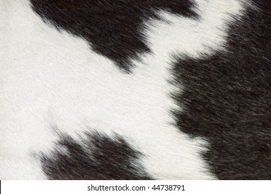 close-up of a cow-hide, texture