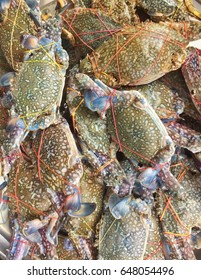 Closeup Crab