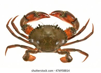 Closeup Of A Crab Isolated On White Background