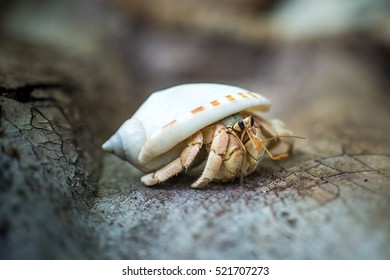 close-up of a crab sitting on the stone